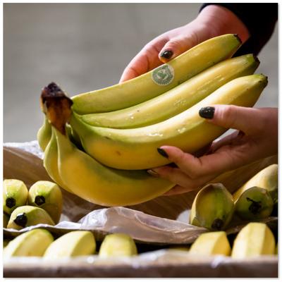 6045fd8f9c5cb_Fairtrade3.png