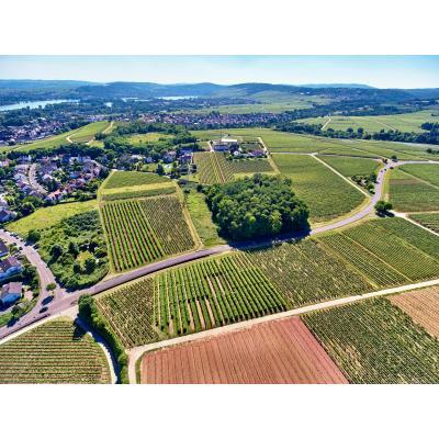 Bauen im Weinberg (002).jpg