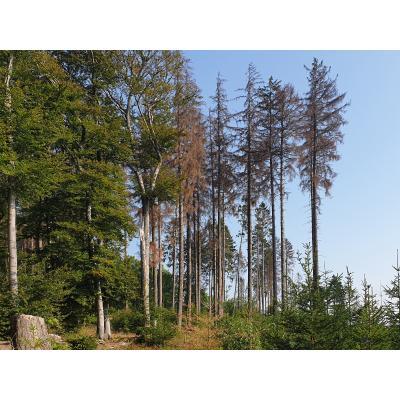 Waldsterben_1.jpg