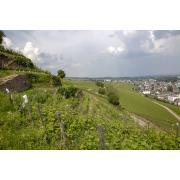Krähennest_Rüdesheim_2000px_20160606_0233.jpg